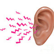 Sound Entering Human Outer Ear Poster