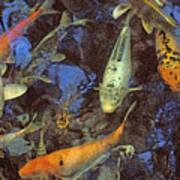The Koi Pond Poster