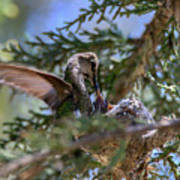 7311 Tilted Nest Feeding Poster