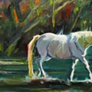 7D Horse River Poster