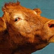 Bull Poster