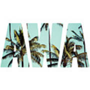 Coconut Palm In Hawaii, Usa. Poster