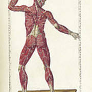 The Science Of Human Anatomy Poster