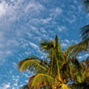 8156- Palm Tree Poster