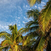 8167- Palm Tree Poster