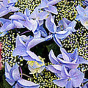 Close-up Of Flowers Poster