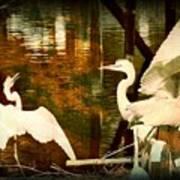 9 Egrets Poster