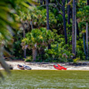 Palmetto Forest On Hunting Island Beach Poster