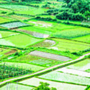Rice Fields Scenery Poster