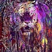 Tiger Predator Fur Beautiful  Poster