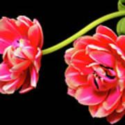 Tulip Floral Arrangement Poster