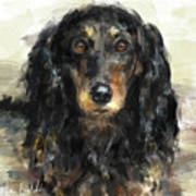 A Beautiful Artistic Painting Of A Dachshund  Poster