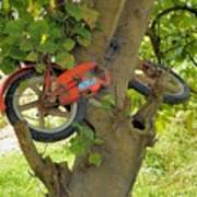 A Bike Growing In A Tree Poster