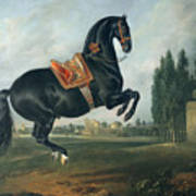A Black Horse Performing The Courbette Poster