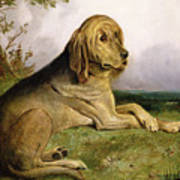 A Bloodhound In A Landscape Poster