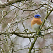 A Bluebird  Poster
