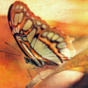 A Butterfly On A Leaf  Poster