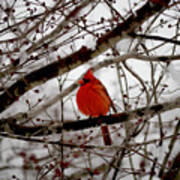 A Cardinal In Winter Poster