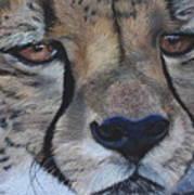 A Cheetah Poster