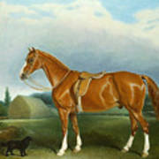 A Chestnut Hunter And A Spaniel By Farm Buildings  Poster by John E Ferneley