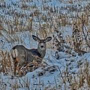 A Christmas Day Young Buck Poster