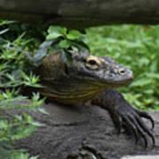 A Close Up Look At A Komodo Dragon Lizard Poster