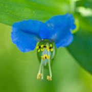 A Close-up Of A Bright Blue Flower Poster