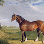 A Clydesdale Stallion Poster by John Frederick Herring Snr