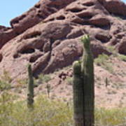 A Couple Of Cacti In Phoenix Poster
