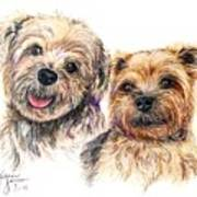 A Couple Of Yorkies Poster