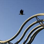 A Crow In Flight, Arhus, Denmark Poster