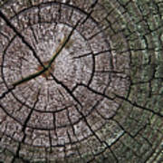A Cut Above - Patterns Of A Tree Trunk Sliced Across Poster