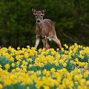 A Deer And Daffodils IIi Poster