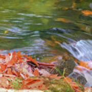 Flowing Water Fall Leaves Closeup Poster