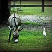 A Donkey And His Bird Poster