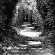 A Dreamy Path Poster