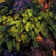 A Fern Botanical By H H Photography Of Florida Poster