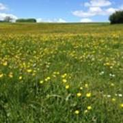A Field Of Buttercups Poster