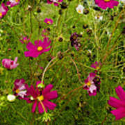A Field Of Wild Flowers Growing Poster