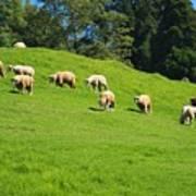 A Flock Of Sheep Grazes On Lush Grass Poster