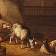 A Goat And Two Sheep In A Stable Poster
