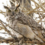 A Great Horned Owl's Wide Eyes Poster