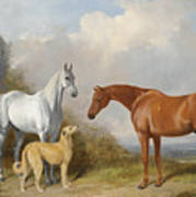 A Grey And A Chestnut Hunter With A Deerhound Poster