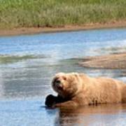 A Hot Day In The Hallo Bay Katmai National Park Preserve Poster