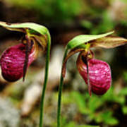 A Lady's Slippers Poster
