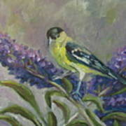 A Lesser Goldfinch Poster