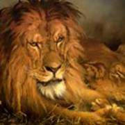 A Lion And A Lioness Poster