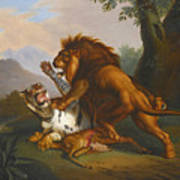A Lion And Tiger In Combat Poster