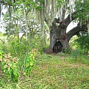 A Live Oak In Purgatory Poster