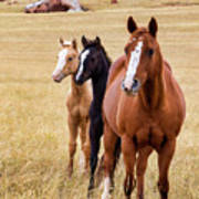 A Mare And Two Friends Poster